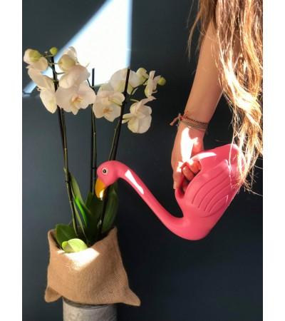 L'Orchidée Blossom