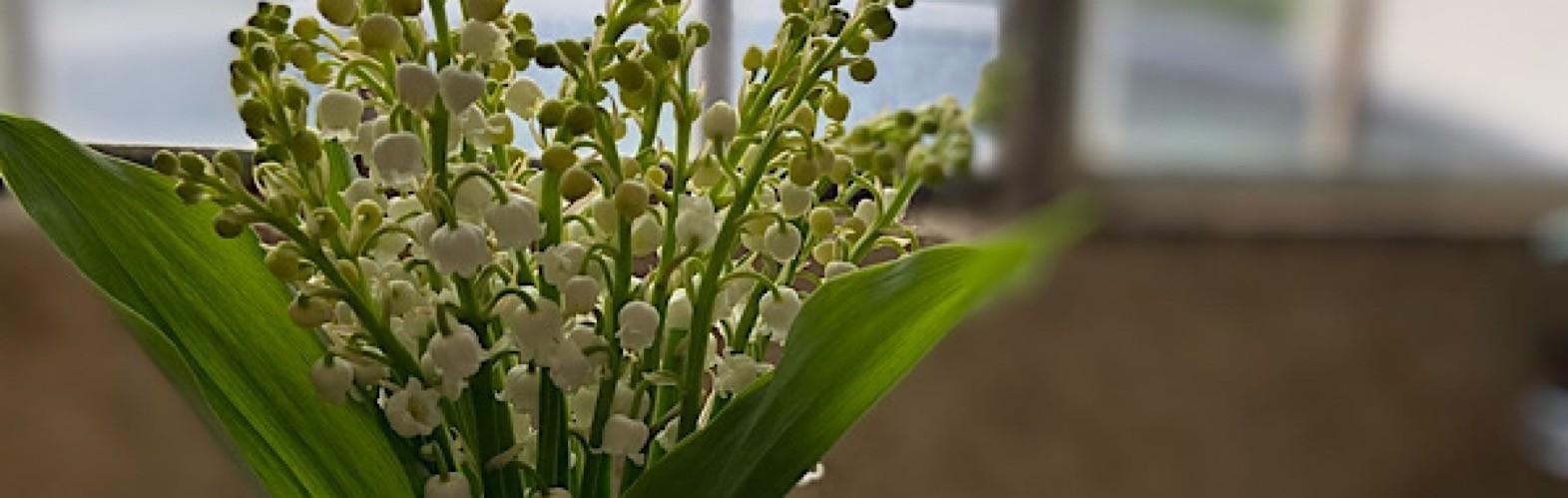 Bouquet du mois
